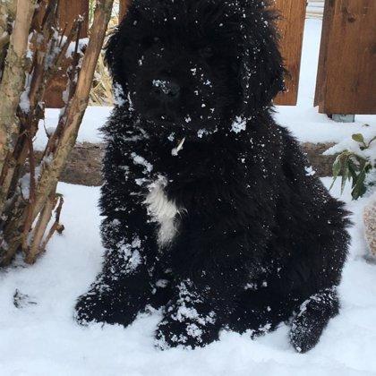 Schwarz im Schnee